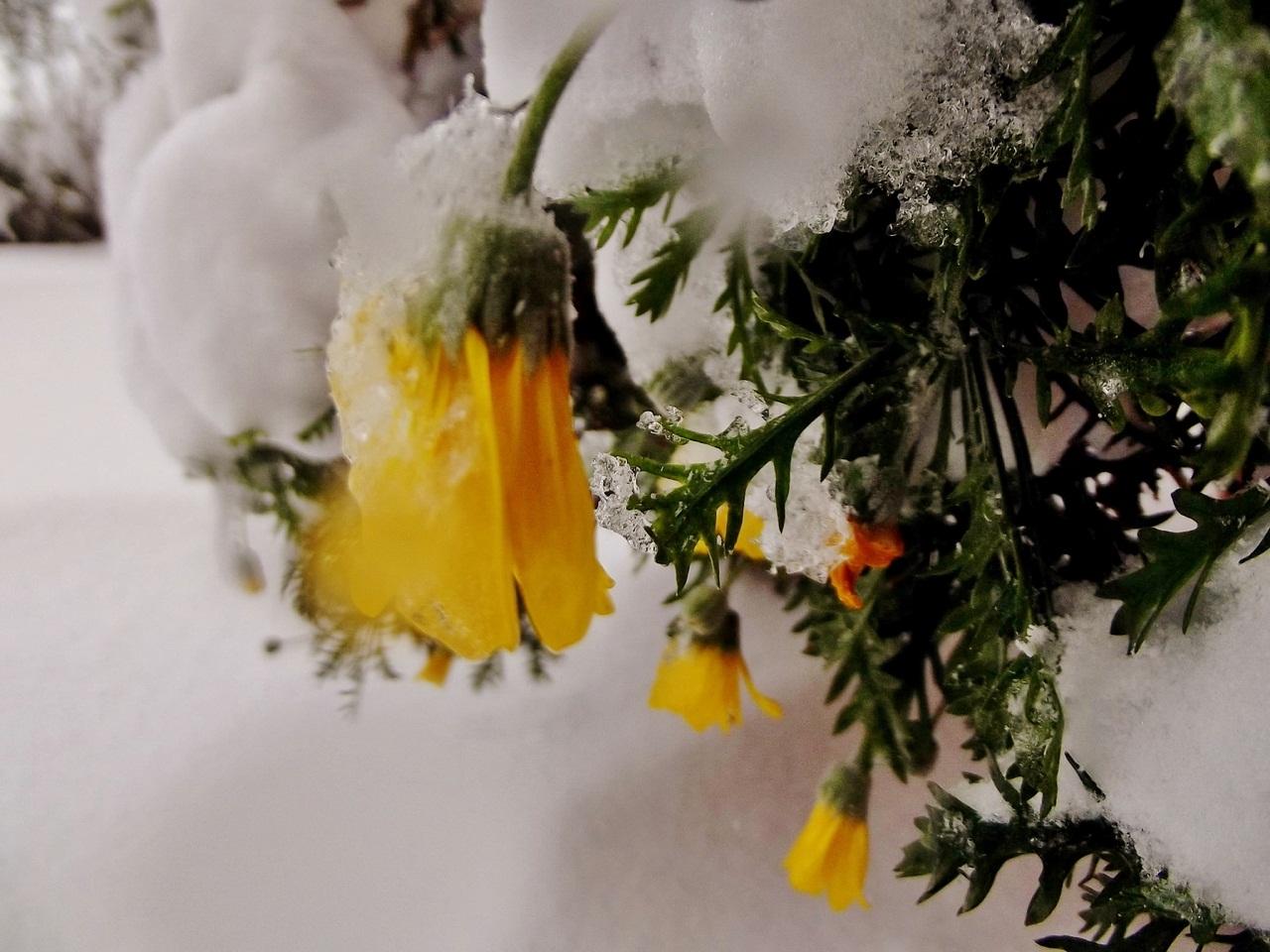 La neve tra racconti proverbi e poesie cronache maceratesi margherite di letizia bernabei altavistaventures Image collections