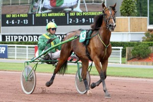driver-cavallo-msgiusto