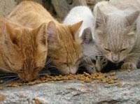 gatti-small