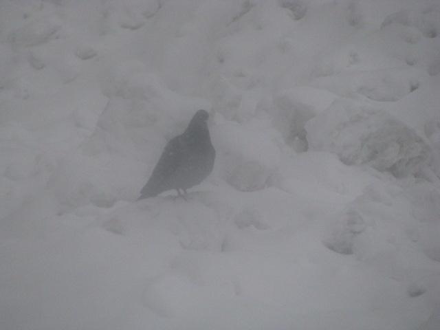 Centro-storico-Macerata-con-neve-22