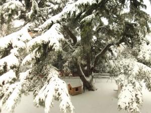 Neve-a-Villa-Serra-foto-di-Annalisa-Mozzoni