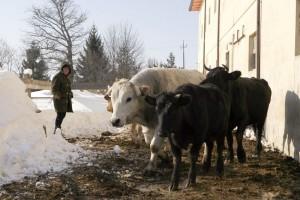 Reportage-neve-feb-2012-10-300x200