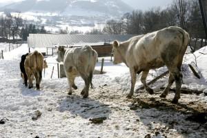 Reportage-neve-feb-2012-111-300x200