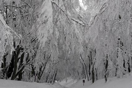 neve-panoramiche-guido-picchio-16