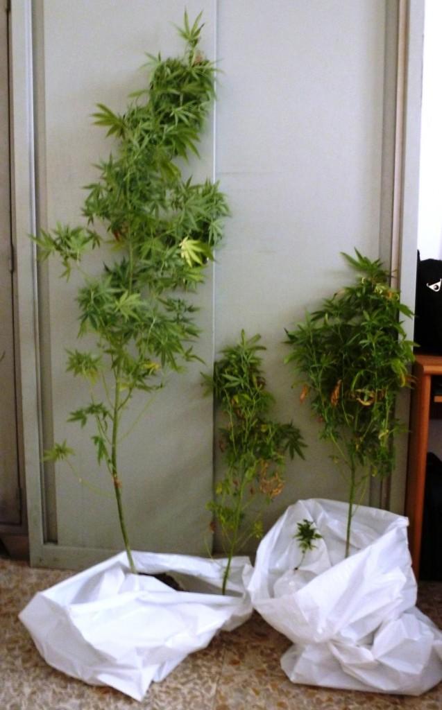 marijuana-2-637x1024