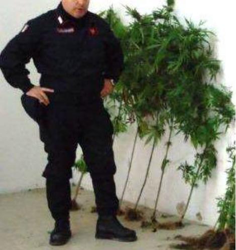 marijuana-3