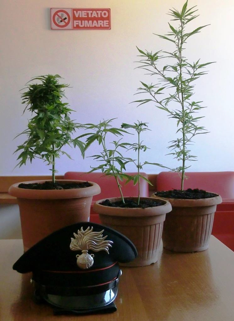 marijuana-5