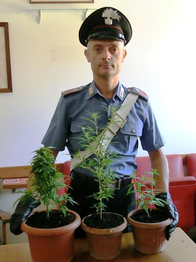 marijuana-6