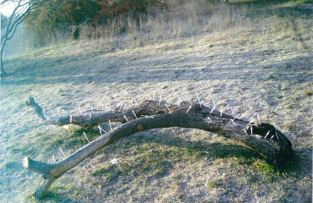 albero_eroina