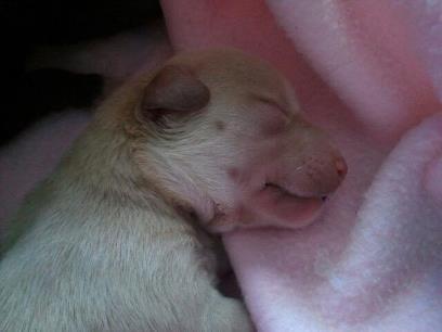 cane ritrovato (1)