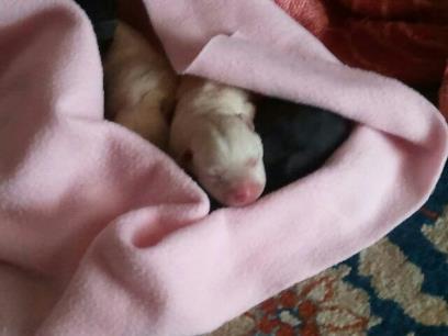 cane ritrovato (2)